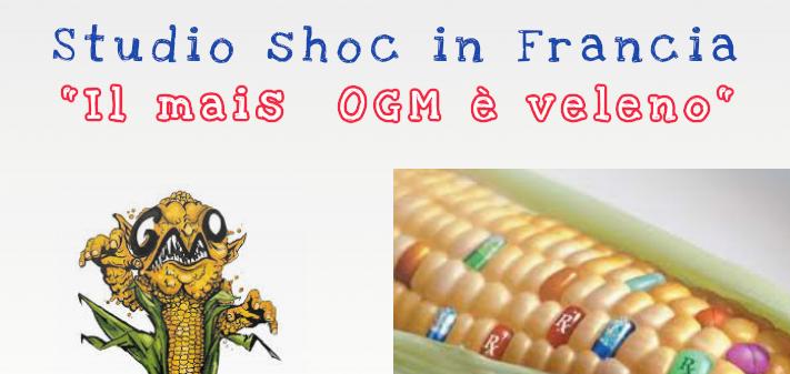 """""""Il mais Ogm è veleno"""". Studio shoc in Francia, allarme del governo e della UE"""